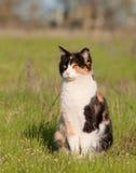 在浅绿色的春天草的杂色猫 免版税库存图片