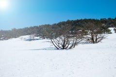 在济州海岛韩国的Hallasan山在冬天 库存照片