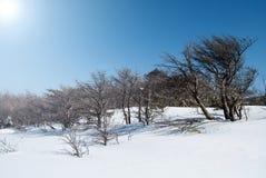 在济州海岛韩国的Hallasan山在冬天 免版税库存照片