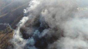 在浓烟盖的森林的空中英尺长度,照相机审阅烟 股票录像