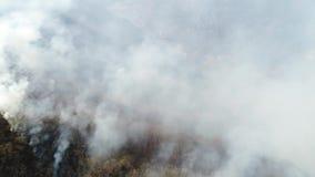 在浓烟盖的森林的空中英尺长度 股票录像