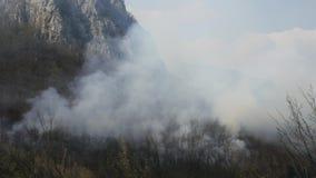在浓烟盖的森林的英尺长度 股票视频