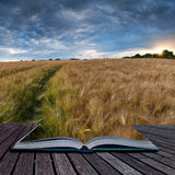 在浓缩夏天的日落的惊人的乡下风景麦田 免版税库存照片