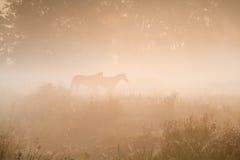 在浓雾的两匹马剪影 库存图片