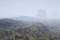 在浓雾的孤立树在小山 库存图片