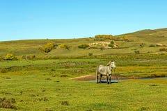 在浩大的草原的一匹马 免版税库存图片