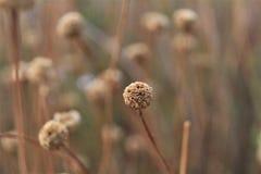 在浪漫风景的黄褐色花 免版税图库摄影