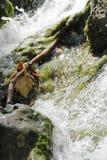 在浪端的白色泡沫的瀑布场面 免版税库存照片