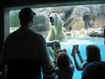 在浮出水面的北极熊从下潜以后在动物园 免版税库存照片