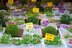 在浮动驳船里面的商店显示室内植物在阿姆斯特丹花市场上的待售,荷兰 免版税库存图片