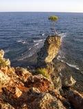 在海Ã ‡ amyuva、凯梅尔、海岸和海滩的孤独的杉木土耳其下 免版税库存图片