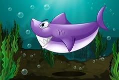 在海下的一个大鲨鱼 免版税库存照片