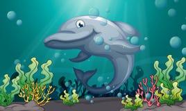 在海下的一个鲨鱼 免版税库存图片