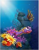 在海下的一个鳗鱼有珊瑚礁的 免版税库存照片