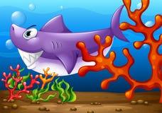 在海下的一条大鱼 库存例证