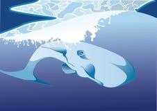在海下的抹香鲸 库存照片