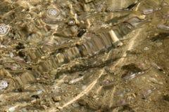 在海下的梭鱼鱼,与太阳阴影的浅水区在 免版税库存照片