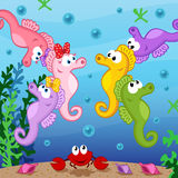 在海下的海象 免版税库存照片