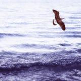 在海下的海鸥 免版税库存照片