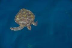 在海下的绿浪乌龟Similan海岛下潜的在Thailan 免版税图库摄影