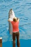在海世界的海豚展示 库存照片