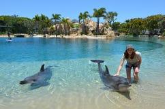 在海世界英属黄金海岸澳大利亚的海豚展示 免版税库存照片