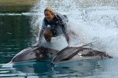 在海世界英属黄金海岸澳大利亚的海豚展示 免版税图库摄影