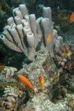 在海中生活 库存图片