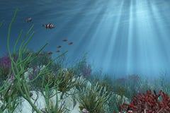 在海中背景 免版税库存图片