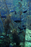 在海中 免版税库存照片