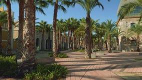 在海军博物馆和Sala Isaak Peral之间的棕榈树丛 股票录像
