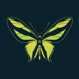 在海军背景的蝴蝶绿色翼摘要 免版税库存图片