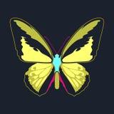 在海军背景的蝴蝶黄色翼摘要 免版税库存照片