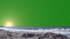 在海动画的日落在绿色背景 皇族释放例证