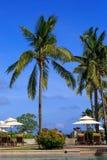 在海南的棕榈 免版税库存照片