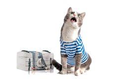 在海员衣服的灰色猫在被隔绝的背景 免版税库存照片