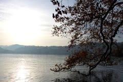 在海和山的背景的树枝 库存图片