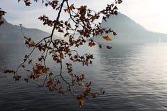 在海和山的背景的树枝 免版税库存图片