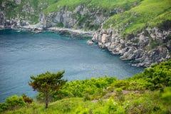 在海和岩石的背景的针叶树 库存图片