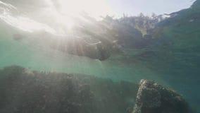 在海和观看的珊瑚礁和热带鱼的年轻女人潜水 风镜的游泳体育的妇女在水面下 股票录像