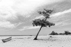 在海啸以后,离开的海滩在斯里兰卡 免版税库存照片