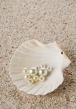 在海壳的多颗珍珠在沙子 免版税库存照片