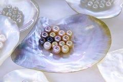 在海壳的多颗珍珠 免版税库存图片