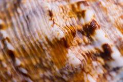 在海壳的样式 库存照片