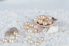 在海壳的珍珠 库存图片