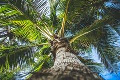 在海岛上的可可椰子 图库摄影