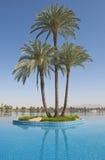 在海岛上的大枣椰子树无限游泳池的 免版税库存照片