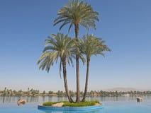 在海岛上的大枣椰子树无限游泳池的 免版税库存图片