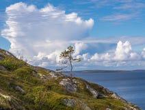 在海岛上的孤独的小杉木德国Kuzov,蓝天, clou 免版税库存照片