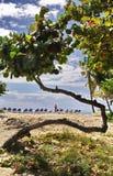 在海岛上的弯曲的树 免版税库存图片